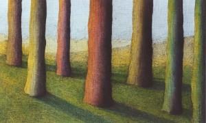 Lumière d'arbres - 1 internet